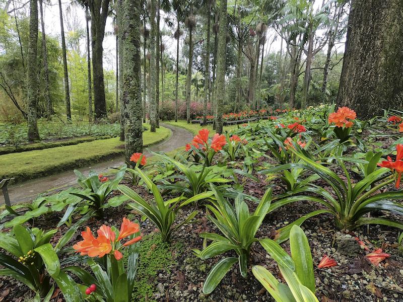 Jardim com árvores e flores