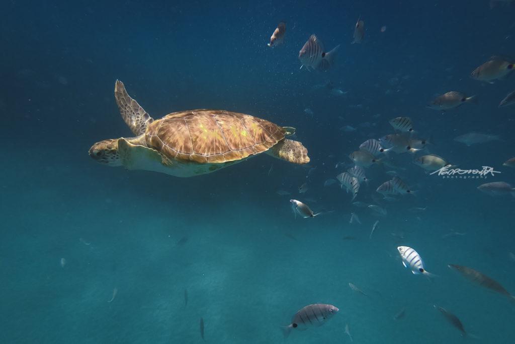 tartaruga marinha com peixes