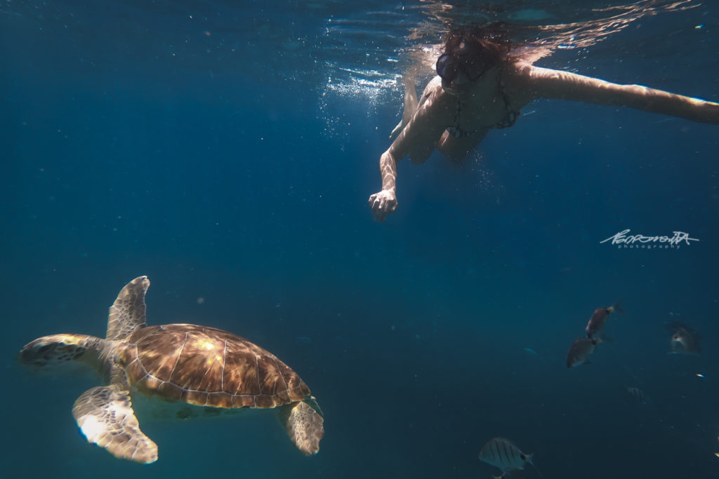 mulher nada com tartaruga