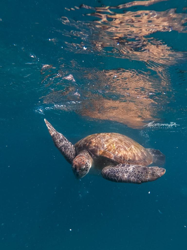 tartarugas a nadar