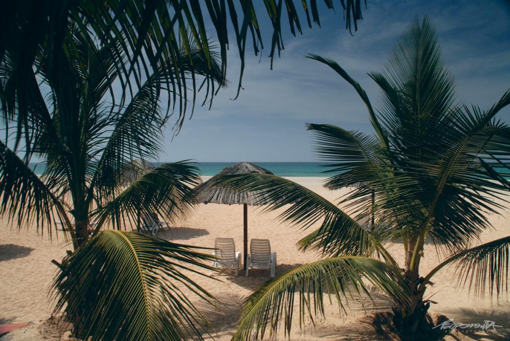 espreguiçadeiras na areia com palmeiras