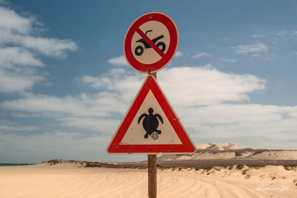 sinalização tartarugas