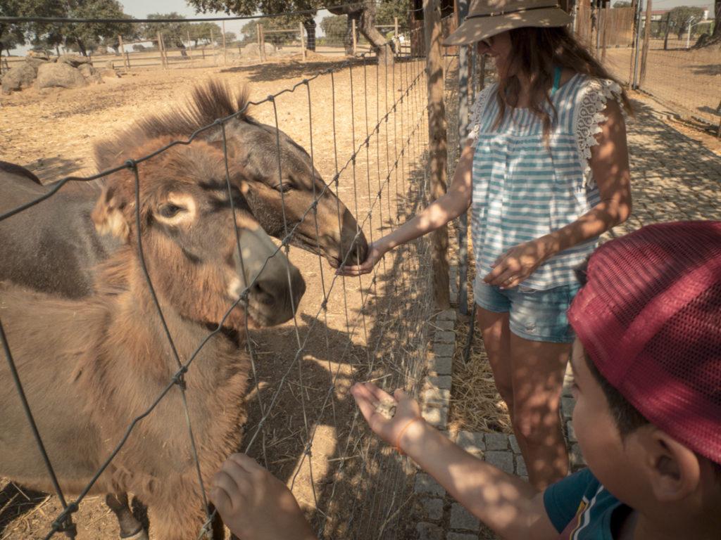 mãe e filho alimentam burros em quinta pedagógica no alentejo
