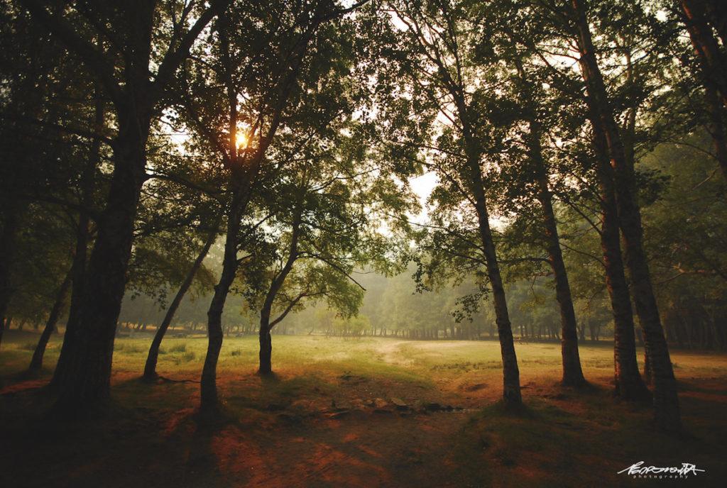 Vale com árvores ao pôr do sol