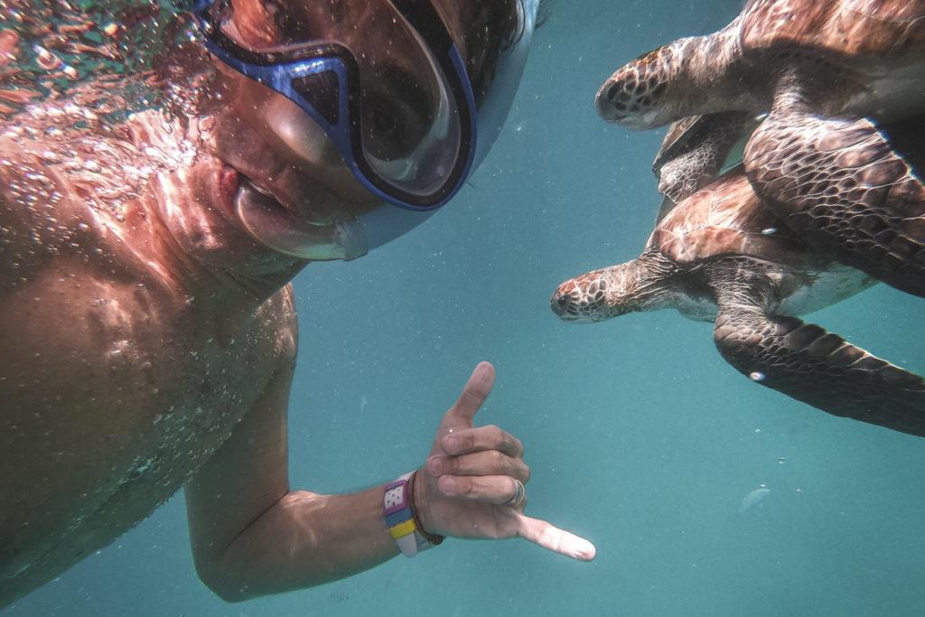 homem mergulha com 2 tartarugas
