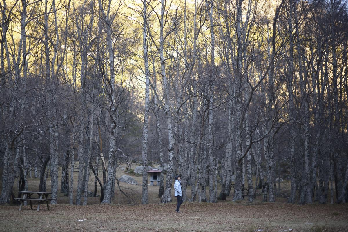 mulher junto a bosque, no inverno.
