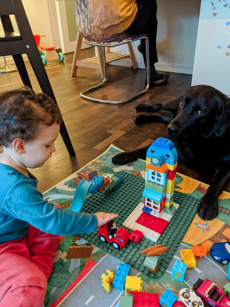 Criança e cachorro labrador a brincar com Legos